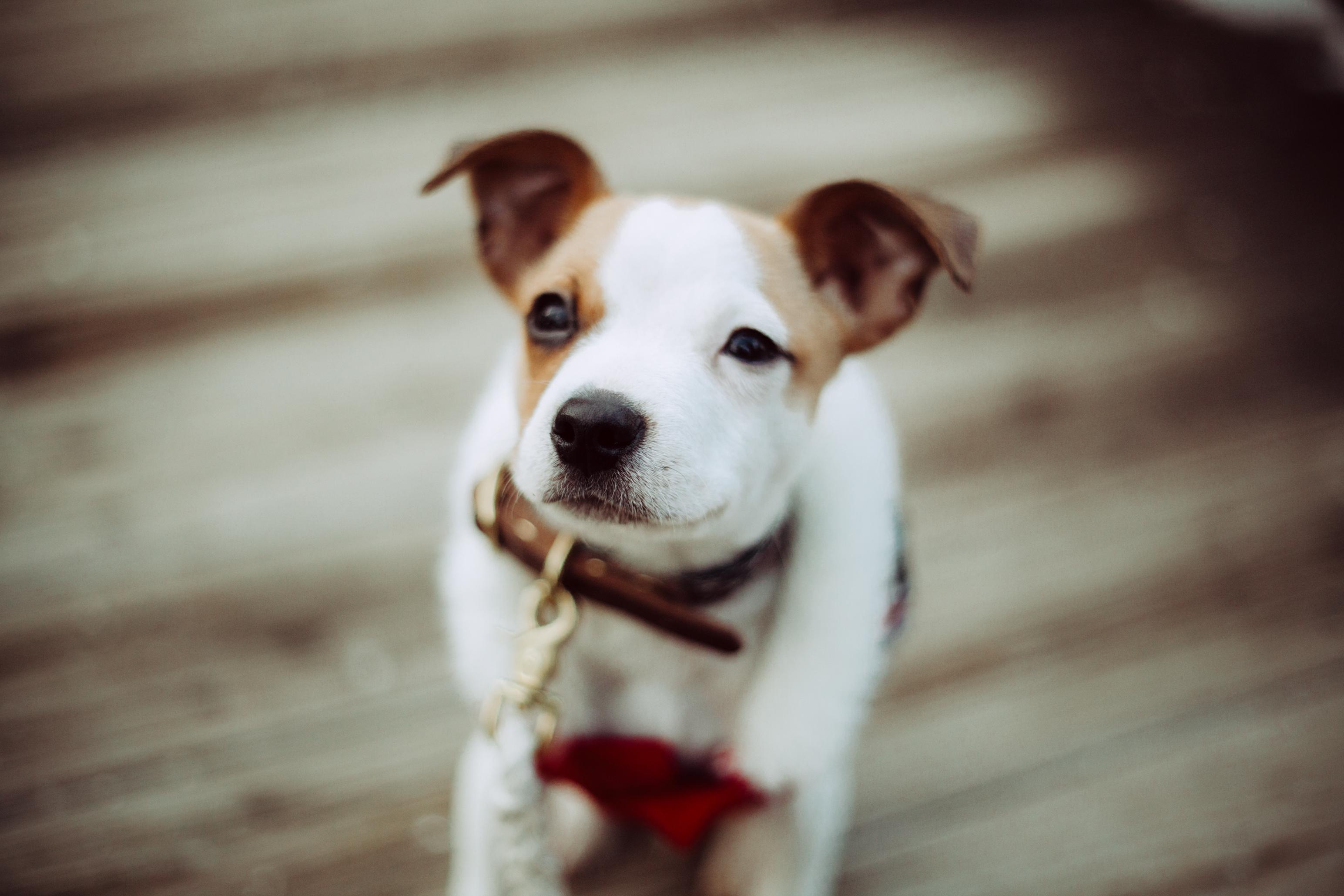 I got a puppy.