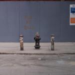 Portraits of Brooklyn.