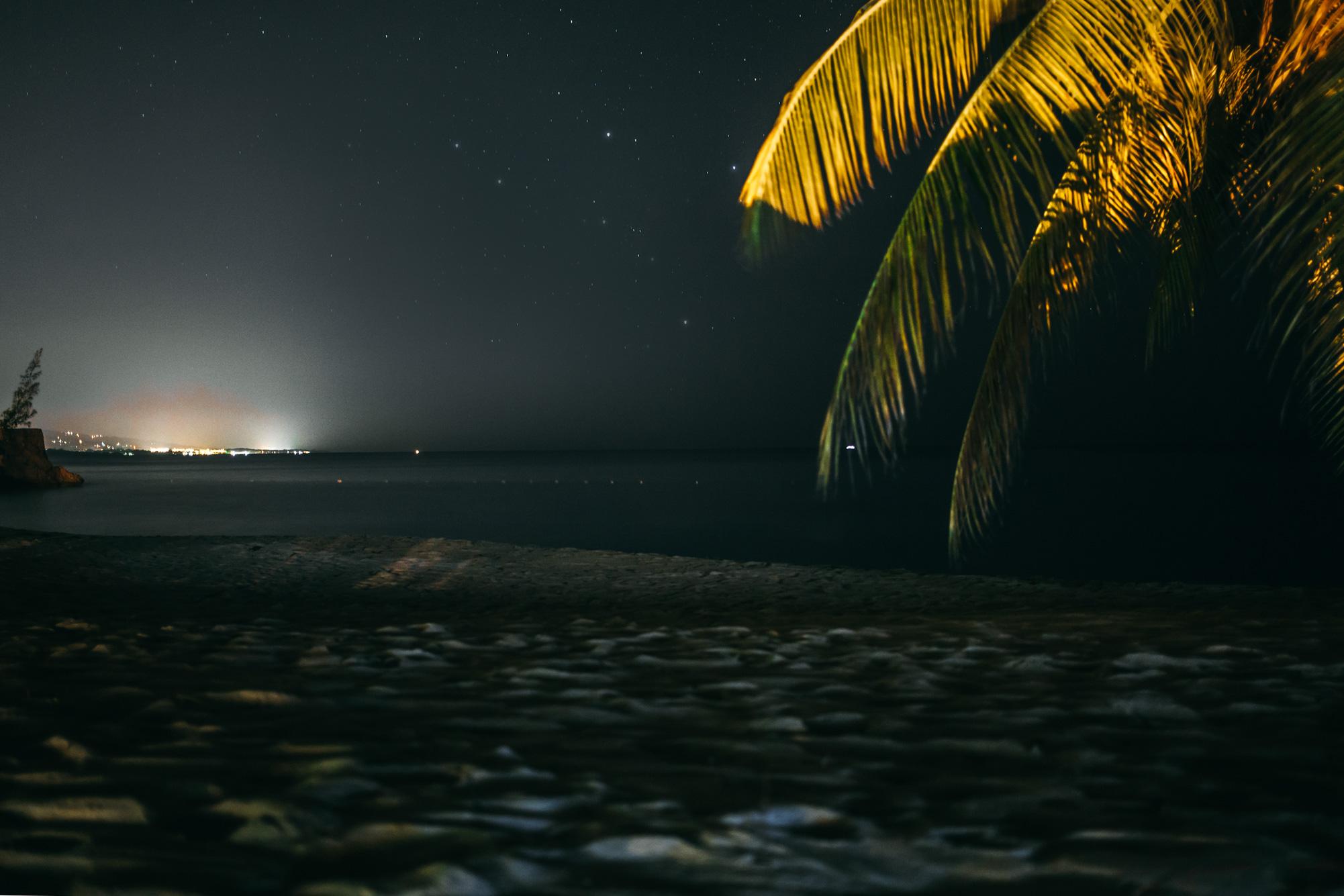 nightpalm